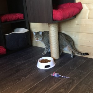 Jungle Cat Hotel chat