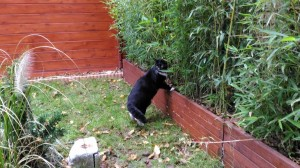 Jumpy chez Jungle Cat - Pension pour chat Lyon